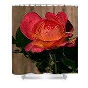 A Red Rosr Against A Weathered  Wood Background Shower Curtain