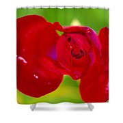 A Red Wet Rose Shower Curtain