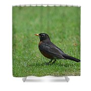 A Robin In June Shower Curtain