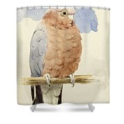 A Rose Breasted Cockatoo Shower Curtain