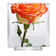 A Rose Is A Rose Is A Rose Shower Curtain by Juergen Roth