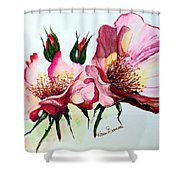 A Rose Is A Rose Shower Curtain by Karin  Dawn Kelshall- Best