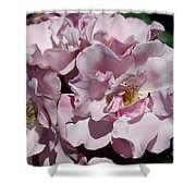 A Rose Named Blueberry Hill  Shower Curtain