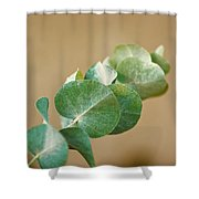 A Row Of Leaves Shower Curtain