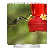 A Ruby-throated Hummingbird Shower Curtain