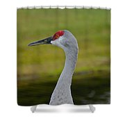 A Sandhill Crane Shower Curtain