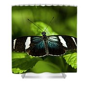 A Sara Longwing Butterfly Heliconius Shower Curtain