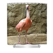 A Scarlet Ibis Stands Perched On A Rock Shower Curtain