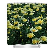 A Sea Of Yellow Daisys Shower Curtain