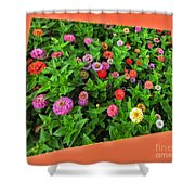 A Sea Of Zinnias 06 Shower Curtain