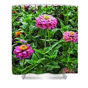 A Sea Of Zinnias 09 Shower Curtain