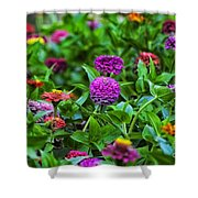 A Sea Of Zinnias 14 Shower Curtain