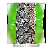 A Section Of A Tree Shower Curtain