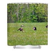 A Shot Of Wild Turkey Shower Curtain