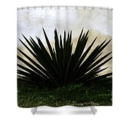 A Simple Yucca Shower Curtain