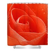 A Single Bloom 3 Shower Curtain