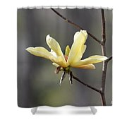 A Single Bloom Shower Curtain