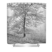 A Single Infrared Beech Tree Shower Curtain