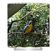 A Single Macaw Bird On A Branch Inside The Jurong Bird Park Shower Curtain