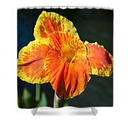 A Single Orange Lily Shower Curtain