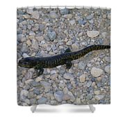 A Slow Salamander  Shower Curtain