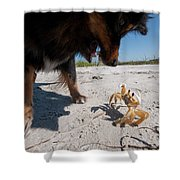 A Small Dog Fights With A Crab Shower Curtain