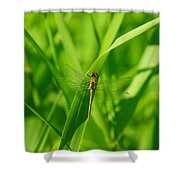 A Small Dragonfly Shower Curtain