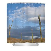 A Small Group Of Cirio Or Boojum Trees Shower Curtain