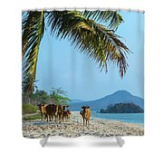 A Small Herd Of Cows Shower Curtain