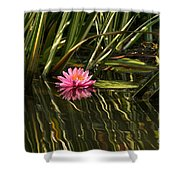 A Small Summer Treat Shower Curtain