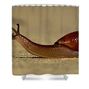 A Snails Pace Shower Curtain