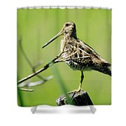 A Snipe  Shower Curtain