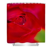 A Soft Wet Rose Shower Curtain