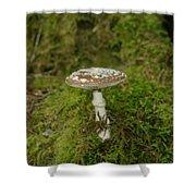 A Sole Mushroom Shower Curtain