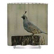 A Sole Rooster Quail Shower Curtain