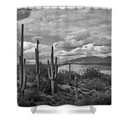 A Sonoran Winter Day In Black And White  Shower Curtain