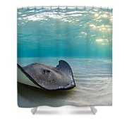A Southern Stingray Shower Curtain
