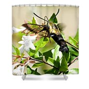 A Sphinx's Pollination Shower Curtain