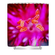 A Splash Of Colour Shower Curtain