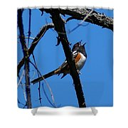 A Spotted Towhee Mid-song Shower Curtain