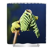 A Spring Beginning  Shower Curtain