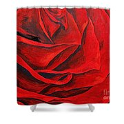A Spring Rose Shower Curtain