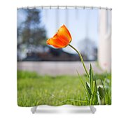 A Spring Tulip Shower Curtain