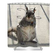 A Squirrel Known As Chippy Shower Curtain
