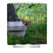 A Squirrel's Day Out Shower Curtain