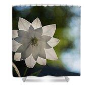 A Star In My Garden Shower Curtain by Georgia Mizuleva