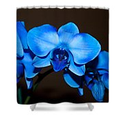 A Stem Of Beautiful Blue Orchids Shower Curtain