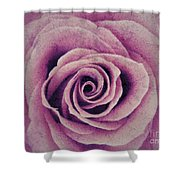 A Sugared Rose Shower Curtain