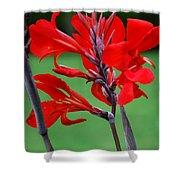 A Summer Red Flower Shower Curtain