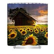 A Sunflower Moment Shower Curtain